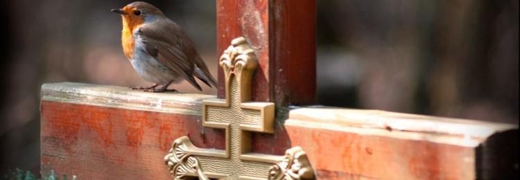 К чему примета, если увидеть птичку на могиле