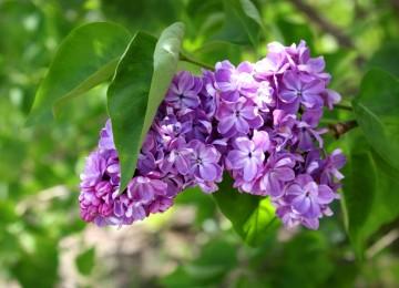 Гадание по цветкам: подготовка, правила проведения