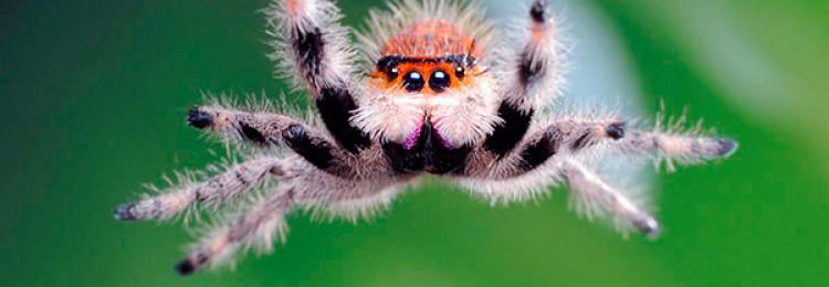 Примета, если увидеть паука вечером, утром или днем