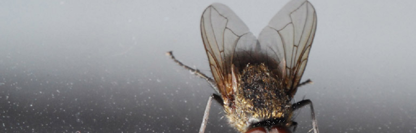 Приметы с мухой зимой: в доме, в кружке, на окне и в церкви