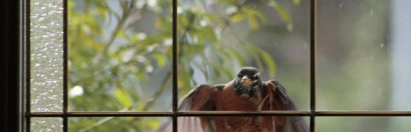 Птица бьется в окно: приметы