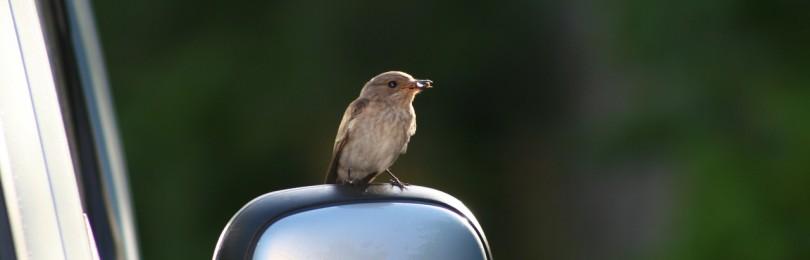К чему приметы, если сбить птицу машиной или найти сбитую на дороге