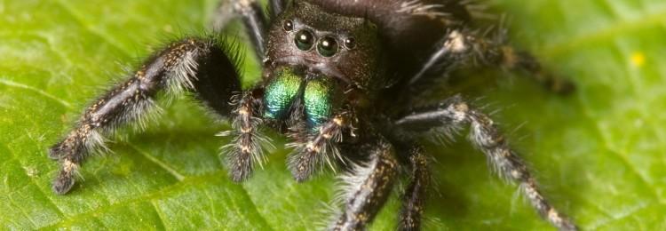 К чему увидеть паука: приметы