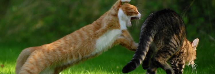Почему по примете нельзя обижать кошек