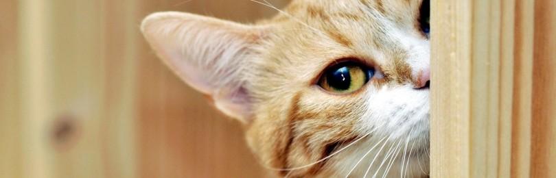 Чужая кошка пришла в дом: приметы