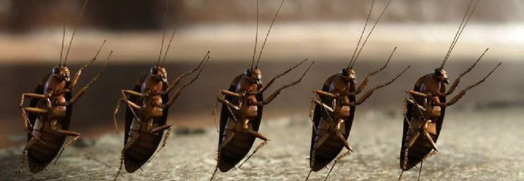 Заговор от тараканов: как читать, отзывы