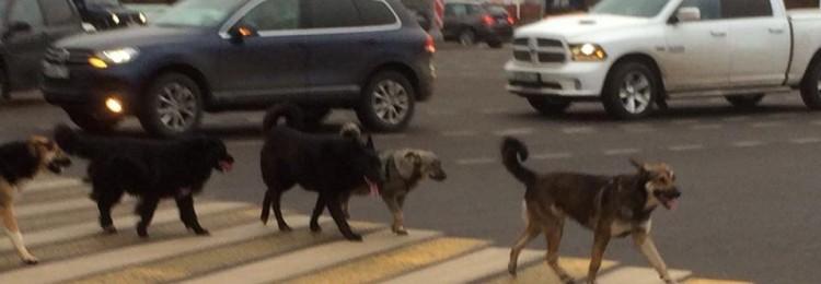К чему сбить собаку на машине: приметы для хозяина, отзывы