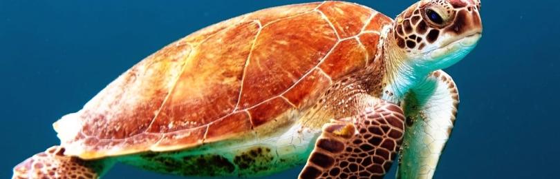 К чему примета увидеть черепаху: в доме, во дворе, в море, на дороге