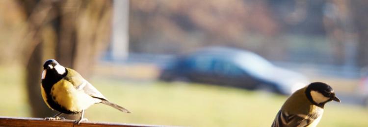 Птица залетела в окно: примета