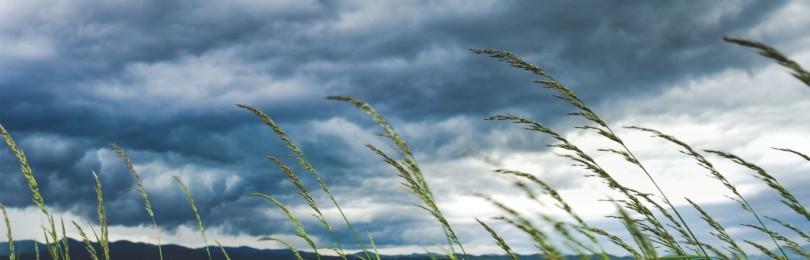 Как читать приворот на ветер на любимого