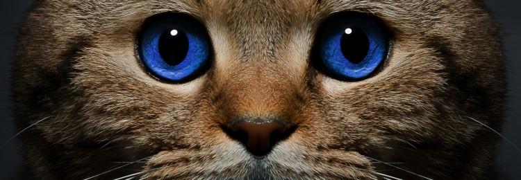 Почему нельзя долго смотреть кошкам в глаза