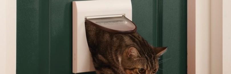 Почему уходят кошки из дома: приметы