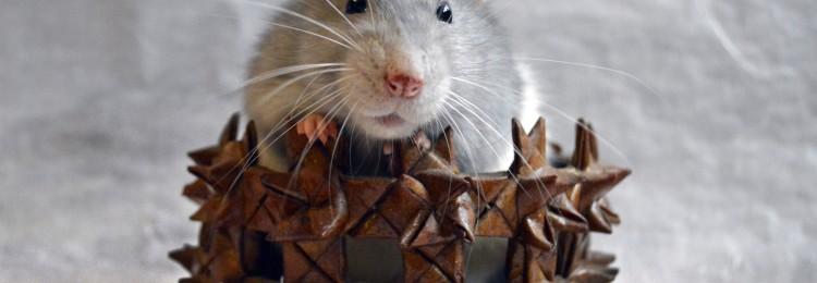Приметы на Новый год Крысы: про любовь, деньги, зачатие и удачу