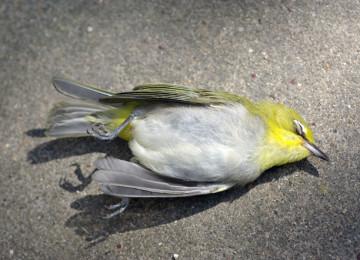 Мертвая птица: приметы
