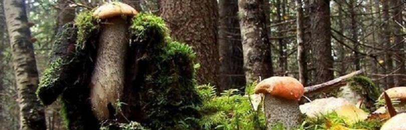 Приметы с грибами: выросли в цветке, много белых в лесу или возле дома