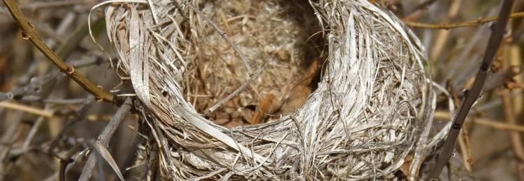К чему по приметам найти гнездо птицы