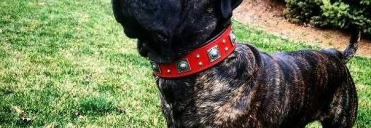 Оберег для собаки своими руками: мастер класс по созданию