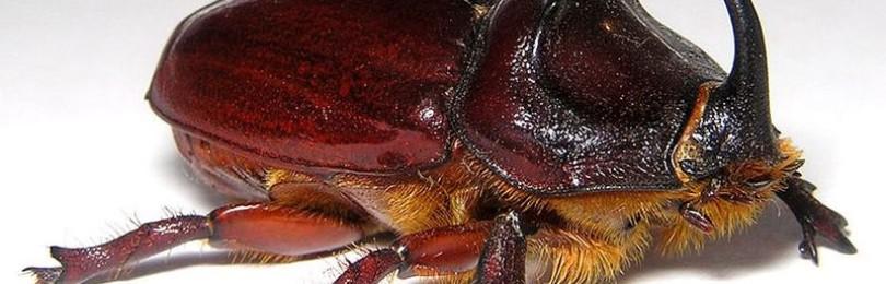 Примета о жуках в доме: если прилетел в квартиру черный жук, золотой, бронзовка, усач, скарабей