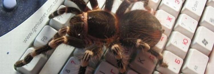 Паук спускается вниз или ползет вверх по паутине: приметы