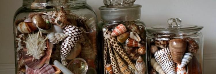 Можно ли хранить ракушки дома: приметы и суеверия