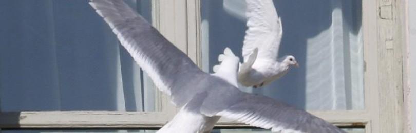 Птица в окно врезалась: примета