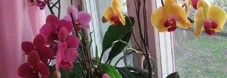 Можно ли по приметам дарить орхидею: в горшке, женщине, маме
