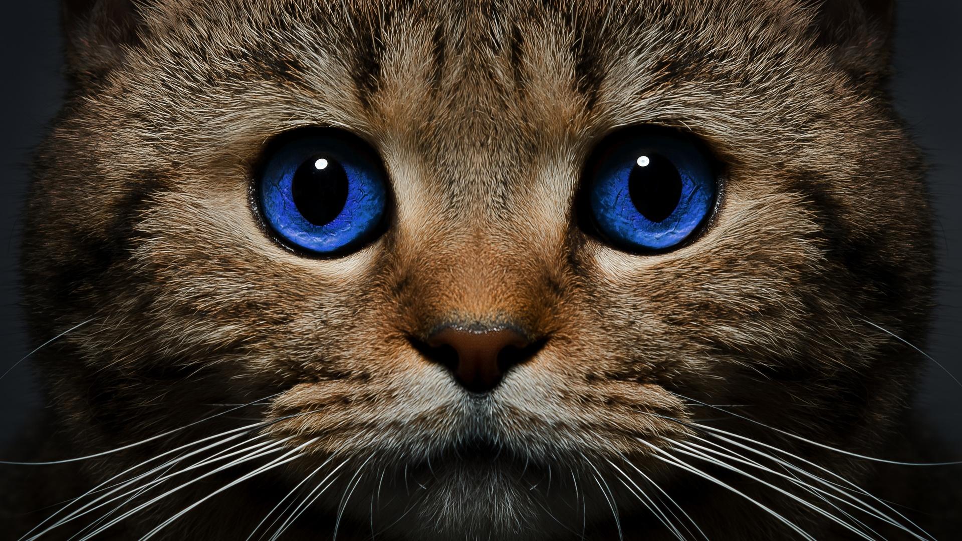 Смотреть красивые картинки кошки